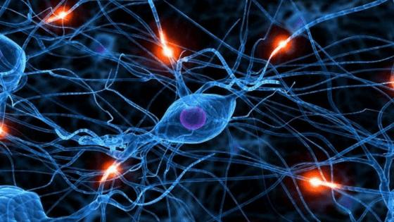 Hemos creado un netflix del aprendizaje